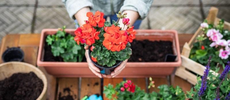 Que planter en avril quelles plantes privilégier