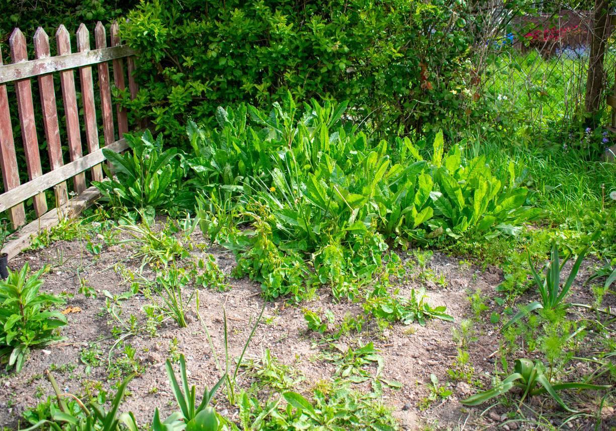 jardin encombré, débarras